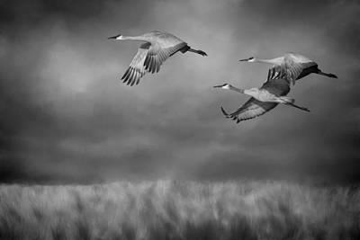 Migration Digital Art - Sandhill Crane Trio In Flight II by SharaLee Art