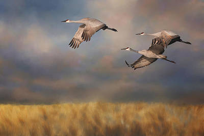Migration Digital Art - Sandhill Crane Trio In Flight 3 by SharaLee Art