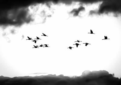 Photograph - Sandhill Cranes #00 by Britt Runyon