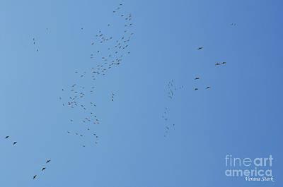 Photograph - Sandhill Cranes 1 by Verana Stark