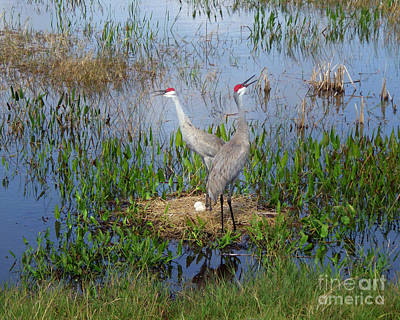 Sandhill Cranes 1210 Original
