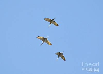 Photograph - Sandhill Cranes 2 by Verana Stark