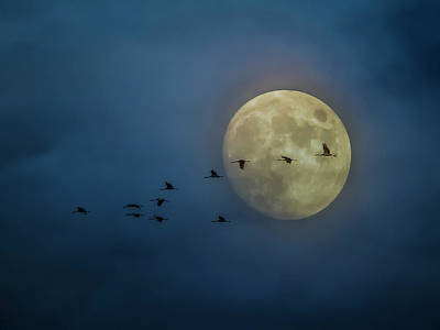Photograph - Sandhill Cranes And The Moon by Patti Deters