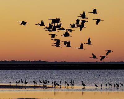 Photograph - Sandhill Cranes At Sunrise 01 by Rob Graham