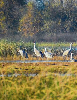 Digital Art - Sandhill Cranes At The Wetlands Digital Painting by Randy Herring