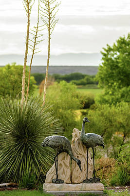Photograph - Sandhill Cranes Bronze - Bosque Del Apache - New Mexico by Debra Martz