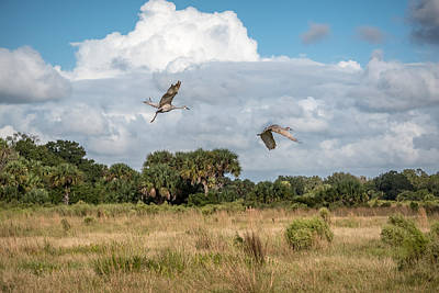 Florida Cracker Photograph - Sandhill Cranes Fly by Scott Mullin