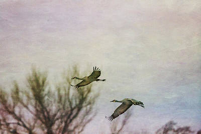 Photograph - Sandhill Cranes Flying - Texture by Kathy Adams Clark