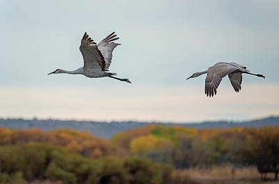 Photograph - Sandhill Cranes In Autumn by Loree Johnson