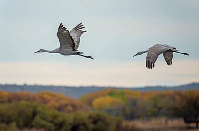 Photograph - Sandhill Cranes In Autumn by Loree Johnson