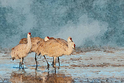 Sandhill Cranes - Morning Stroll Art Print