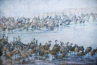 Photograph - Sandhill Cranes Texture by Kathy Adams Clark