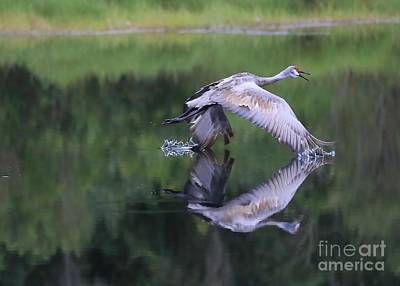 Photograph - Sandhill Retreat by Carol Groenen