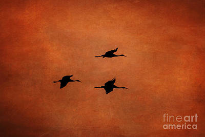 Photograph - Sandhill Silhouette by Scott Wood