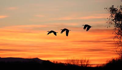 Photograph - Sandhill Sunrise 2 by Jean Clark