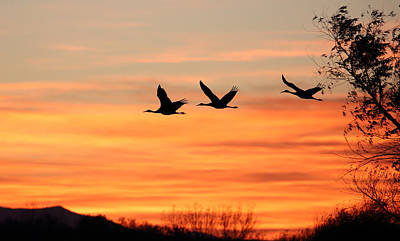 Photograph - Sandhill Sunrise by Jean Clark
