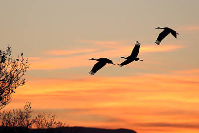 Photograph - Sandhill Sunrise Three by Jean Clark