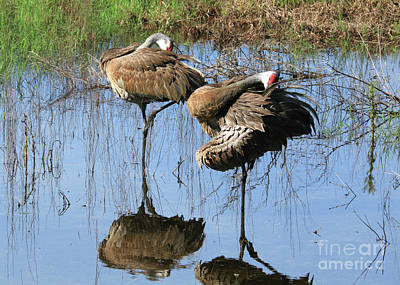 Reflection On Pond Photograph - Sandhill Symmetry by Carol Groenen
