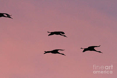 Photograph - Sandhills At Dusk by Paula Guttilla