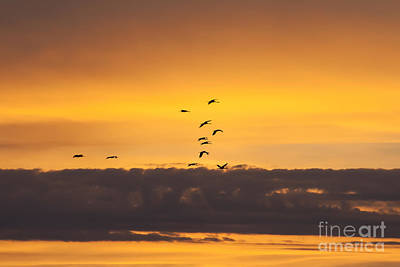 Photograph - Sandhills At Sunset by Scott Wood