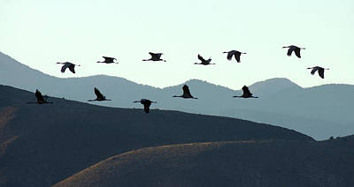 Photograph - Sandhills In Silhouette by Leda Robertson