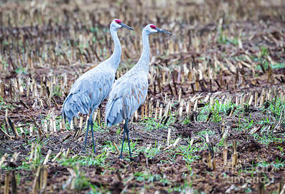 Photograph - Sandhills In Their Fall Coat by Ricky L Jones