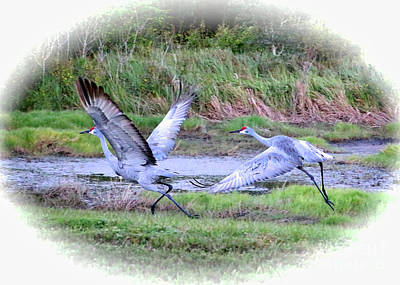 Crane Photograph - Sandhills - Poetry In Motion by Carol Groenen