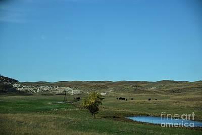 Water Droplets Sharon Johnstone - Sandhills Ranch by Mark McReynolds