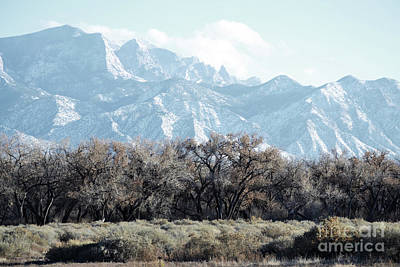 Photograph - Sandia Mountains Forest Trees Landscape by Andrea Hazel Ihlefeld