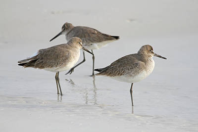 Photograph - Sandpiper X3 by Jim Clark