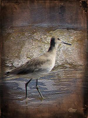 Photograph - Sandpiper 1 by Jim Ziemer