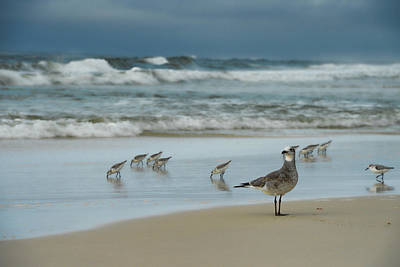 Photograph - Sandpiper Beach by Renee Hardison
