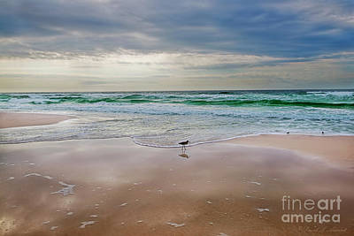 Photograph - Sandpiper by David Arment