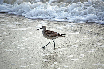 Sandpiper Escaping The Waves Art Print