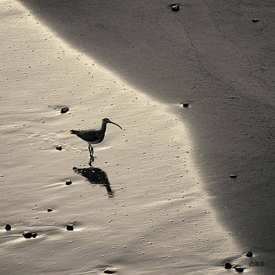 Photograph - Sandpiper I Bw Sq Toned by David Gordon