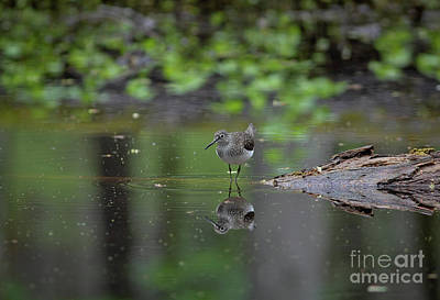 Art Print featuring the photograph Sandpiper In The Smokies by Douglas Stucky
