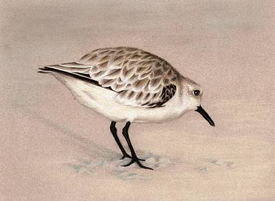 Sandpiper On Sand Art Print by Heather Mitchell