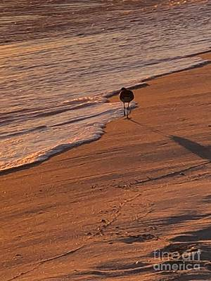 Photograph - Sandpiper On The Beach by Luther Fine Art