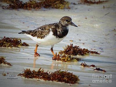 Photograph - Sandpiper Running Down The Edges by Lainie Wrightson