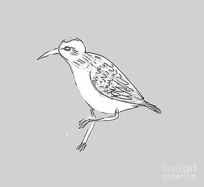 Sandpiper Drawing - Sandpiper Scribble by Marlena Leach