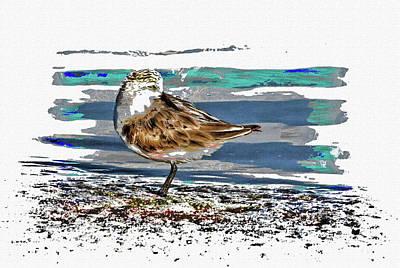 Photograph - Sandpiper Shorebird  by HH Photography of Florida