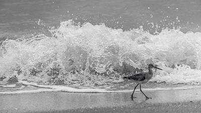 Photograph - Sandpiper Splash Venice Florida by Lawrence S Richardson Jr