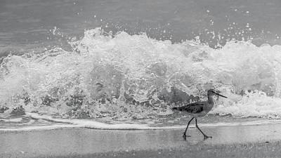 Photograph - Sandpiper Splash Venice Florida by Lawrence S Richardson Jr