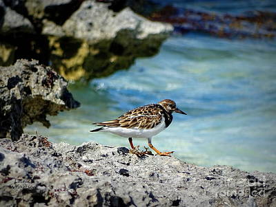 Photograph - Sandpiper Spying Dinner by Lainie Wrightson