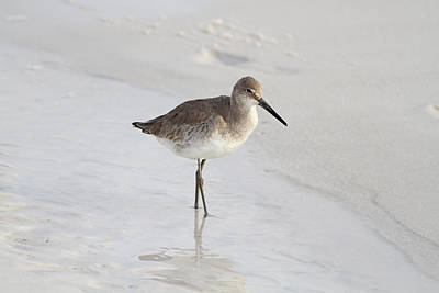 Juan Bosco Forest Animals Royalty Free Images - Sandpiper Stroll Royalty-Free Image by Jim Clark