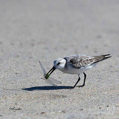 Photograph - Sandpiper With Dragonfly by Michelle Constantine