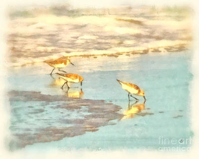 Photograph - Sandpipers Along The Shoreline by Betsy Foster Breen