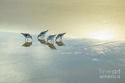 Photograph - Sandpipers At La Jolla Shores Beach, La Jolla, California by Julia Hiebaum