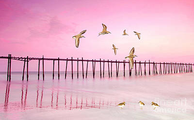 Sandpiper Wall Art - Photograph - Sandpiper Sunset by Laura D Young