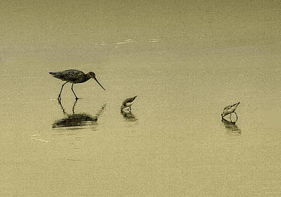 Photograph - Sandpipers by Joseph Hollingsworth